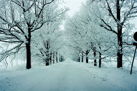 Images Of Winter Trees » Home Design 2017