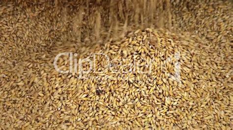 Saatgut Kaufen 940 by Grain Lizenzfreie Stock Und