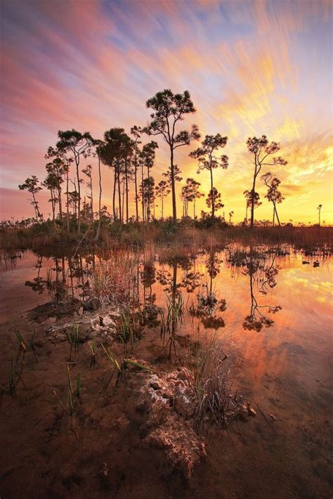 everglades boat tours near naples 17 best images about naples marco fl tours on pinterest