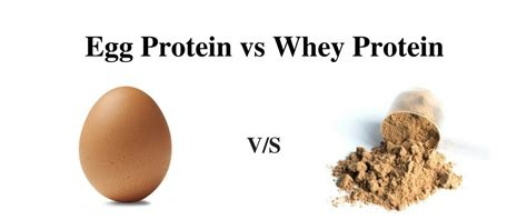 Egg Protein vs Whey Protein: Know the facts