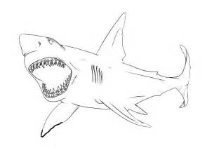 can sharks see color bull shark coloring pages for etn printable sharks