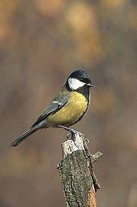 burung richmountain indonesia blog