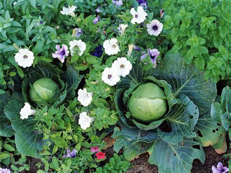 Where to Grow Fruits and Vegetables   HGTV
