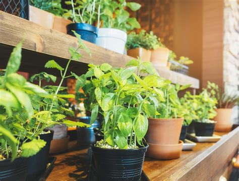 5 plants that make an indoor vegetable garden house method