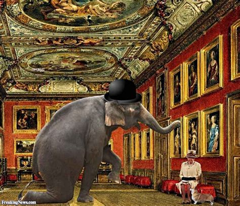 the elephant room the elephant in the room pictures