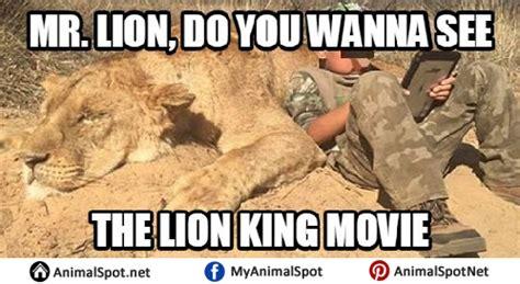 Lions Super Bowl Meme - lion memes