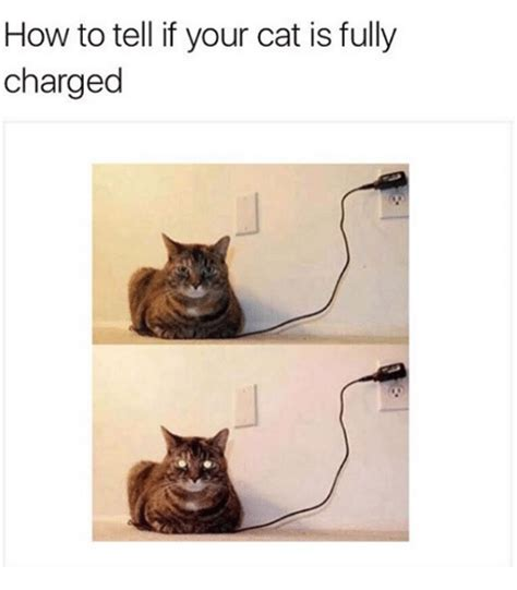how to tell if your is in how to tell if your cat is fully charged grumpy cat meme on sizzle