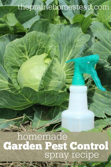 25 best ideas about garden pests on aphid