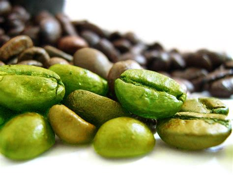Coffe Green green coffee extract may benefit in weight loss nutrient
