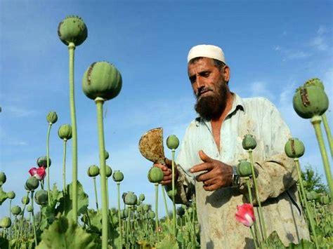 Opium by Heroin Boom Afghanistan Producing 25 Times More Opium