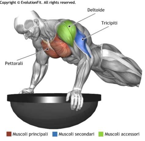 flessioni pettorali interni pettorali muscoli utilizzati per allenamento push up in