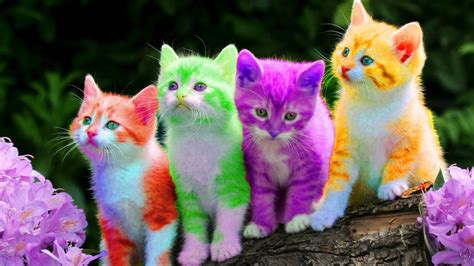 what color are cats kitten cat colorful learning color for