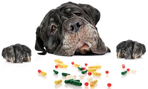 vitamin d for dogs reduction of vitamin d in veterinary medicine at illinois