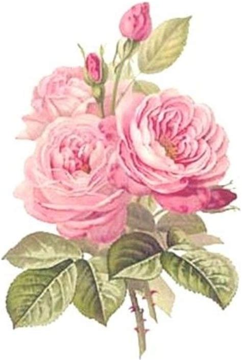 ThE BesT ReDouTe CaBbaGe RoSeS ShaBby WaTerSLiDe DeCALs *ChiC
