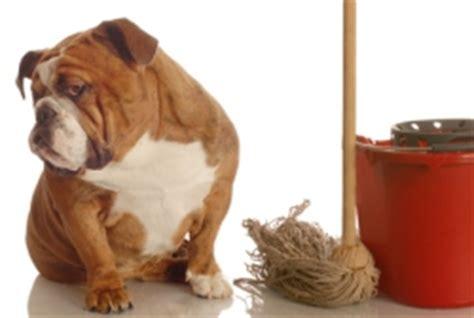 urinflecken matratze urinflecken entfernen tipps bei flecken und uringeruch