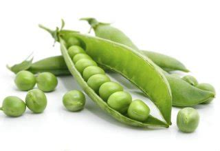 can dogs eat sugar snap peas can i give my peas can pet dogs benefit from fresh peas