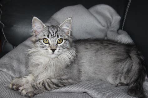 chat on donne chaton 3 mois gratuit 46000 cahors don chats et