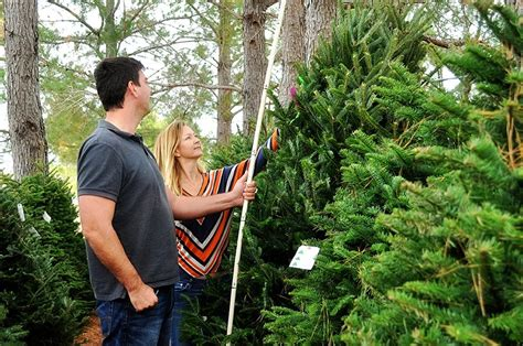christmas tree farms in san antonio where to chop your