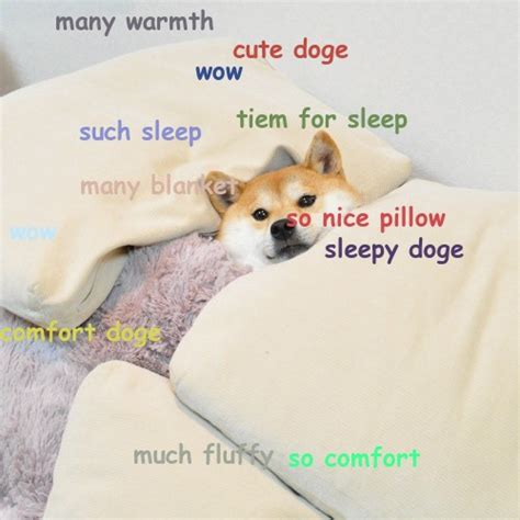 Doge Meme Tumblr - 100 shibe doge tumblr doge pinterest sleep