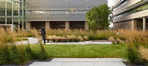 calamagrostis a karl foerster around native meadow grasses design by andrea cochran grasses