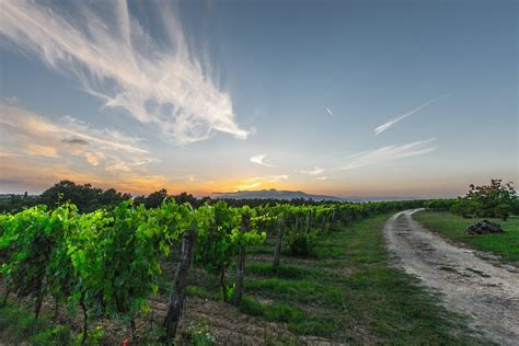 Valley Interiors Free Photo Vines Tuscany Grapes Field Free Image On