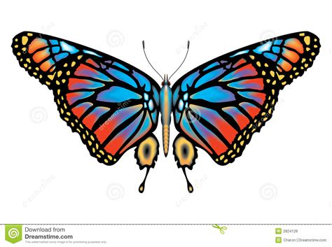 monarch color colorful monarch butterfly isolated royalty free stock