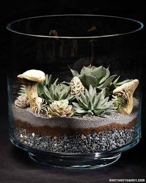 alive     terrarium martha stewart