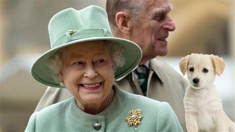 queen elizabeth s dog queen names puppies after harry potter characters now to
