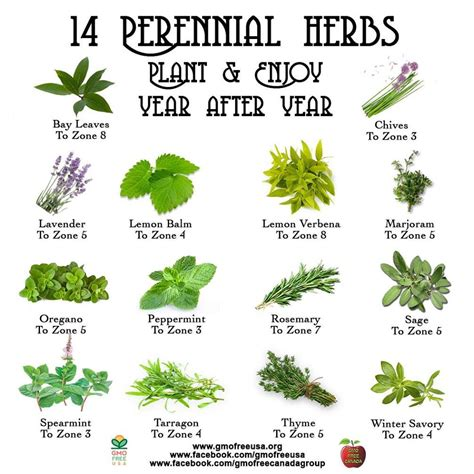Planter Meaning by Herbs Are Mostly Perennial Herbs Meaning They Will Either