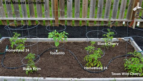 Raised Tomato Planter by Two And A Farm April 2014