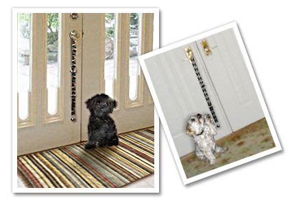 how to potty a fast and easy 1000 images about doggon on doggies for dogs and beds
