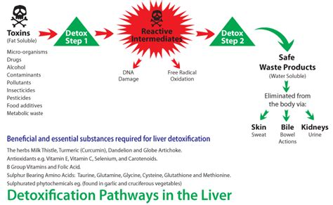 Detox For Liver Cancer by Aromatase Inhibiting Foods And Herbs Drjockers