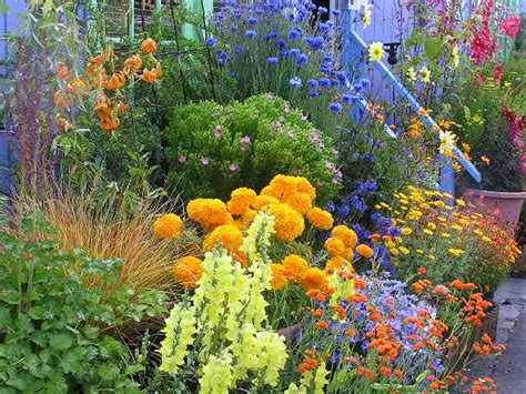 annual garden flowers pin by vered gabay on gardens of