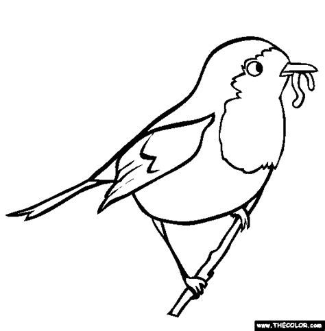 american robin coloring page american robin edt 3470 birding group
