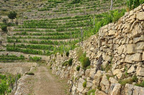 terrazzamenti liguri i terrazzamenti quando l uomo spos 242 la natura il