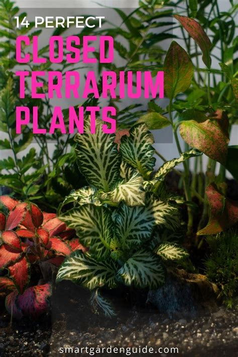 closed terrarium plants   amazing closed