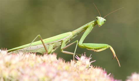 garden flies pest how to attract beneficial bugs modern farmer