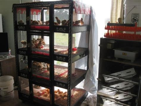17 best images about chickens brooders incubators