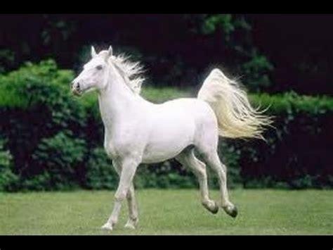 sciogli le trecce i cavalli testo elitevevo mp3