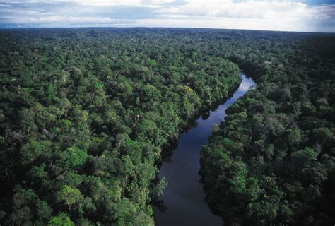 amazon brazil many means amazon rainforest quot lungs of our planet quot