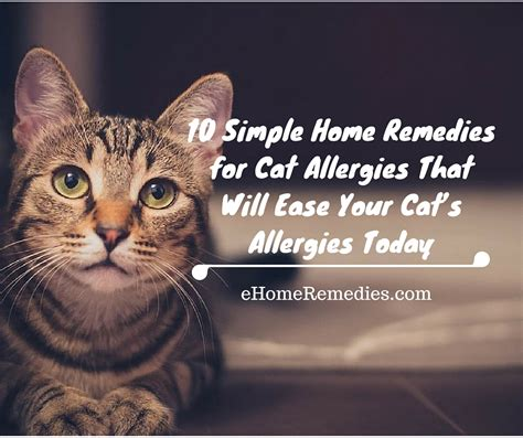 remedies for allergies 10 simple home remedies for cat allergies