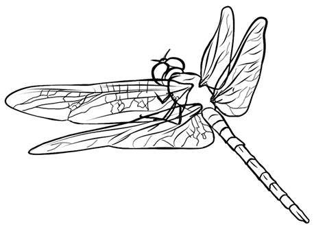 Free Dragonfly Coloring Page 5 Dragonfly Colouring Pages