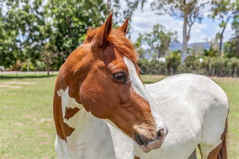 are horses color blind color blind a highly unscientific classification of