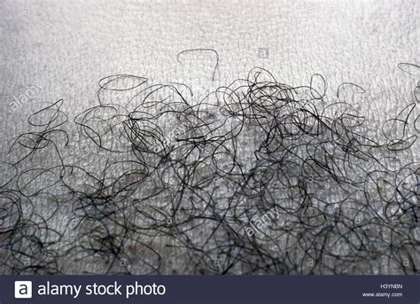 why is the texture of pubuc hair different k 246 rper haare nahaufnahme s w k 246 rper shell detail