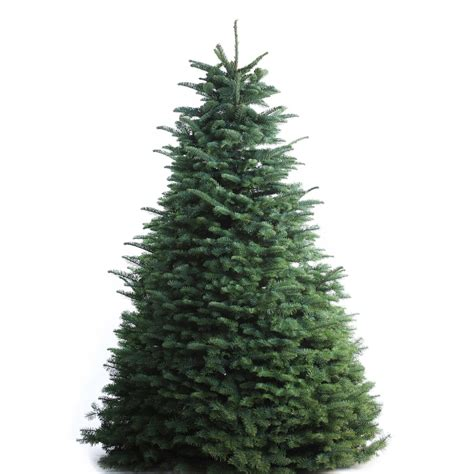 lowes real christmas tree shop 7 8 ft fresh noble fir tree at lowes