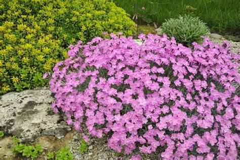 Rok Flower 78 rock garden plant selection guide sun plants zone 5