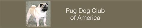 pug club of pug club of america home
