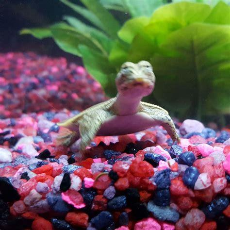 dd fish pets