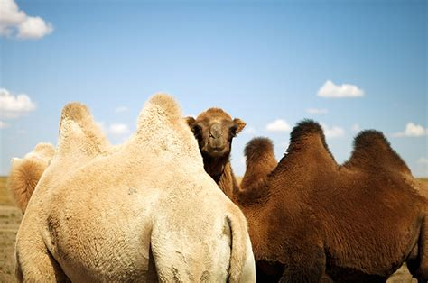 0008227969 finding gobi main edition readers travel photograph competition february animals