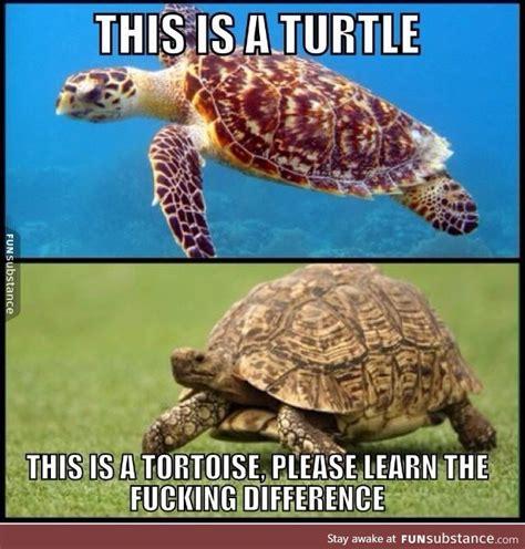 Tortoise Meme - turtle vs tortoise tortoise and turtle